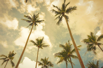 Coconut trees in summer sky background, vintage tone