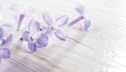 small lilac petals on white wooden table macro background