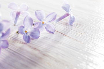 lilac flowers on table in the morning light macro photo