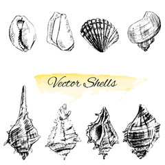 Seashells hand drawn vector graphic etching sketch isolated on white background, collectionunderwater artistic marine element design for greeting cards, print design, cover page magazine, scrapbooking