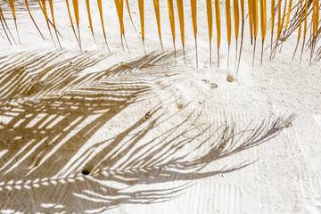 ombres de palmes sur plage de sable blanc des Seychelles
