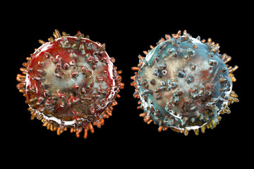 B- and T-lymphocytes. Immune cells isolated on black background. 3D illustration