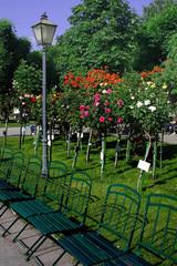 Rosarium im Wiener Volksgarten