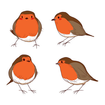 Set of different hand drawn color cute robin birds