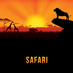 Vector illustration of Africa landscape with African lion standing on rock and sunset background. .Safari theme.