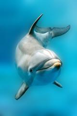 Spoed Fotobehang Dolfijn dolphin smiling eye close up portrait detail