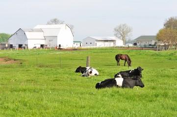 Three Cows, One Horse