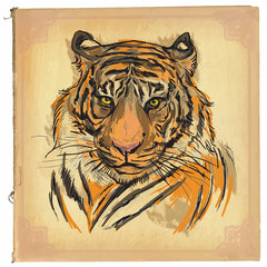 tiger - colored line art