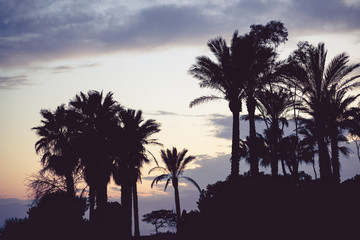 Silhouette of palm trees at sunset with vintage color toning and shallow depth of field.