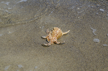Shell in the sand on the beach