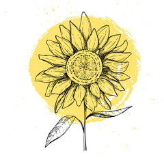 Hand drawn vector illustration - Sunflowers. Vintage