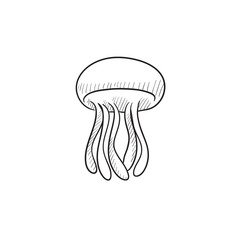 Jellyfish sketch icon.