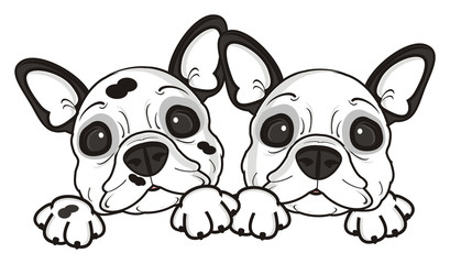 two, couple, together, dog, french, bulldog, breed, background, white, isolated, cartoon, puppy,  animal, muzzle, snout, paws