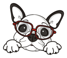 glasses, dog, french, bulldog, breed, background, white, isolated, cartoon, puppy, muzzle, snout, paws