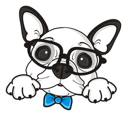 bow, blue, boy, glasses, dog, french, bulldog, breed, background, white, isolated, cartoon, puppy, muzzle, snout, paws