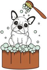 basin, wash, bathe, brush,  foam, soap, bubbles, sit, dog, french, bulldog, breed, background, white, isolated, cartoon,