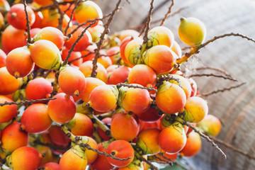 Catechu Areca Nut / Catechu Areca Nut Mature Ripe On Tree.