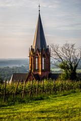 Katharinenkirche in Oppenheim hinter Weinbergen
