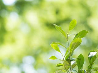 新緑の中の芽生え