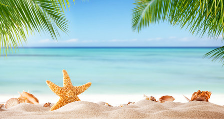 Tropical beach with various shells in sand