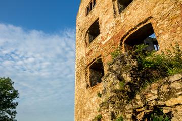 Taube im Fenster der Ruine der Burg Landskron in Oppenheim