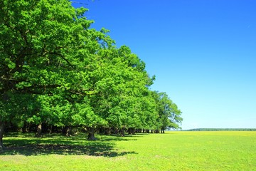 Green forest and blue sky in background