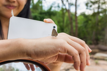 Lovely butterfly suddenly catch hand with blurred smartphone shooting and nature tree bokeh background