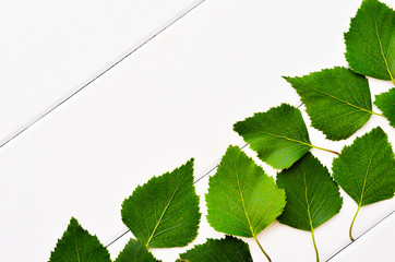 Background of white boards and green leaves arranged angle