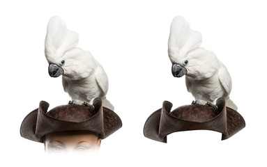 White Cockatoo isolated on white
