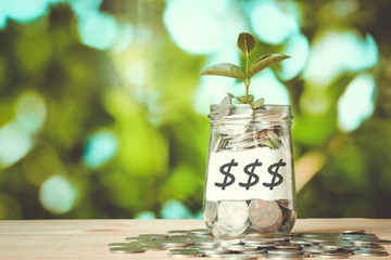 save money for investment concept plant growing out of coins mon