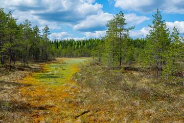Colorful bog landscape