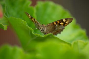 Macro Mariposa.