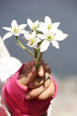 little girl holding white flowers out toward the camera, cropped view, focus on foreground