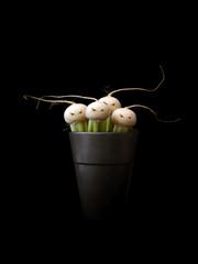Anthropomorphic vegetables in pot, studio shot