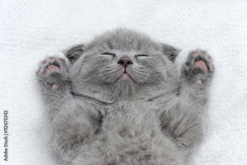 Wall mural Kitten on white blanket