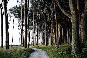 Tree lined pathway cutting through forest