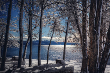 View through snow covered trees of lake and mountains