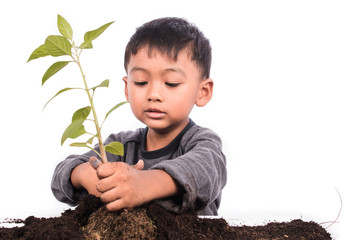 Cute little boy planting tree