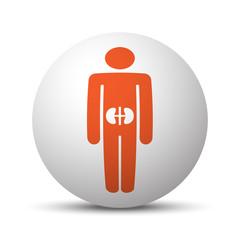 Orange Kidneys icon on white ball