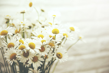 Bouquet of fresh chamomile