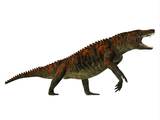 Uberabasuchus Side Profile - Uberabasuchus was an archosaur carnivorous crocodile that lived in the Cretaceous Period of Brazil.
