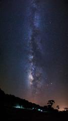 Silhouette of Tree and Milky Way at Phu Hin Rong Kla National Pa