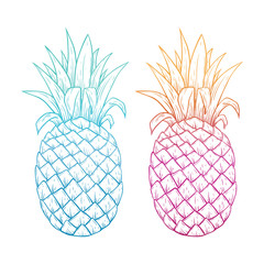 Colorful Pineapple With Line Art or Sketchy Style