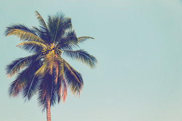 Coconut palm tree and blue sky vintage with space.
