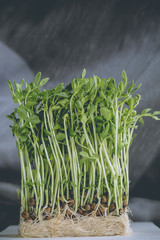 green pea sprout, young green pea sprout with seed ready to eat in plating pot