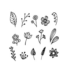 Vector of hand draw of flower and plant