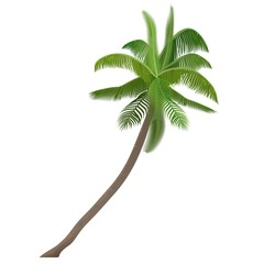 Exotic tropical Coco nut vector high detailed palm tree isolated.