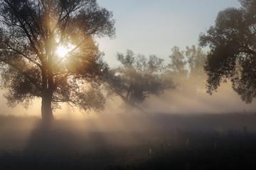 sun rays through the trees in the fog