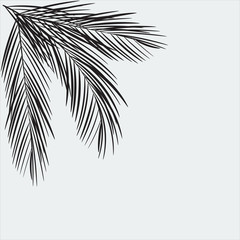 Palm Tree Leaves silhouette.