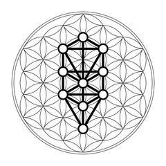 Flower of life, 10 Sephirot, Tree of life, Kabbalah